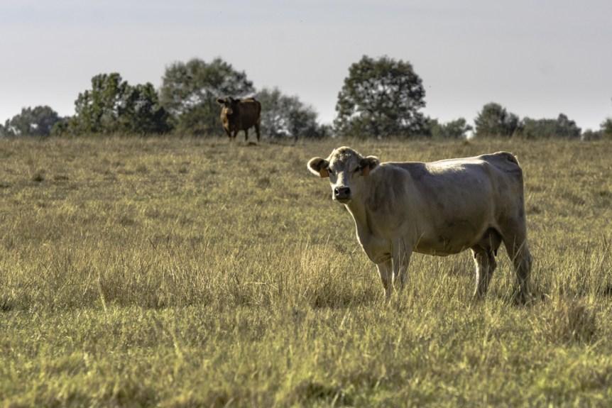 pasture condition