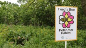 bayer feed bee program national pollinator week