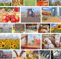 agriculture diverse state