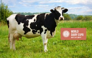 enter cattle world dairy expo