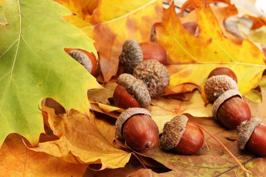fall foraging foods