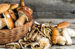 grow mushrooms