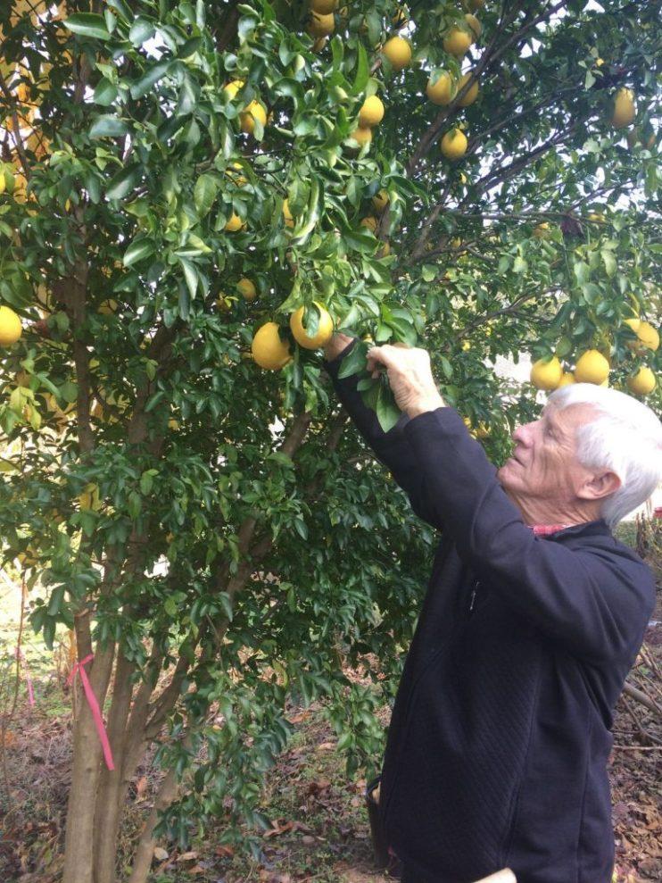 sweet sour fruit surprise