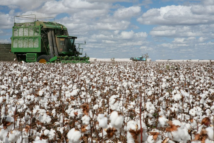 tough year cotton producers