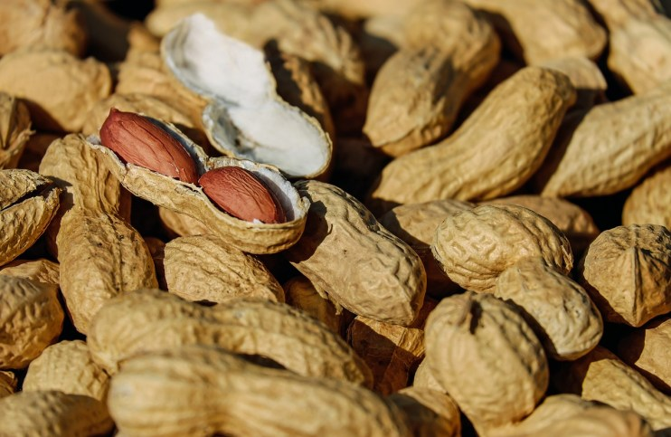 peanut varieties