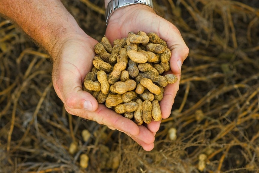 peanut marketing