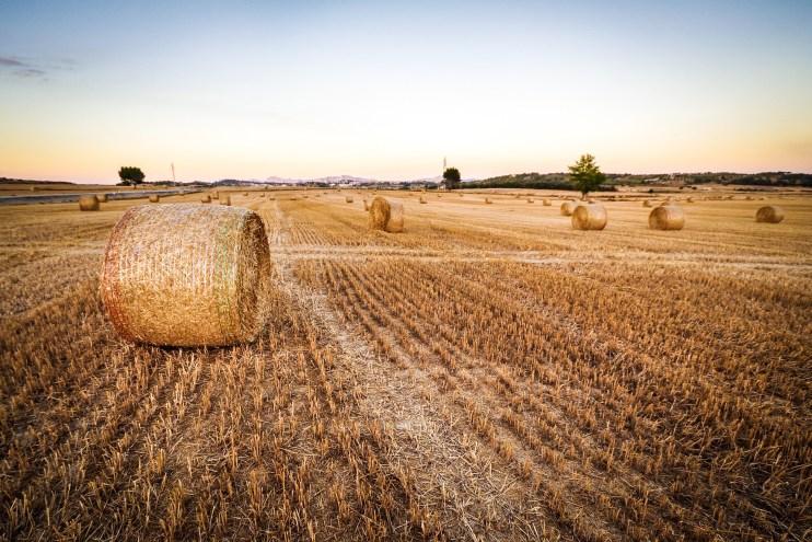 hay acreage