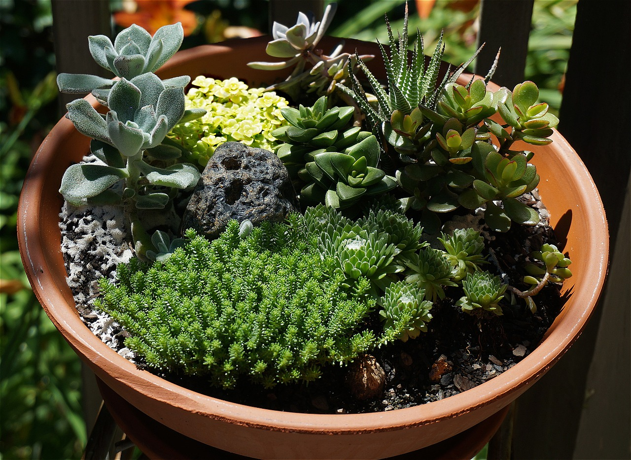 Unique Succulent Garden Ideas Southeast Agnet