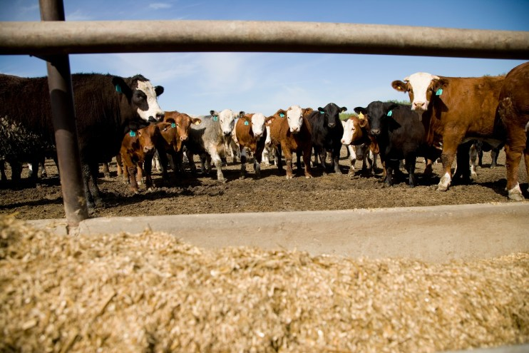 Cattle on Feed Report
