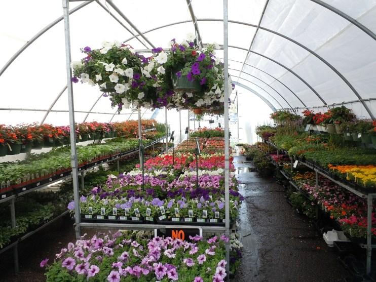 keep greenhouse warm