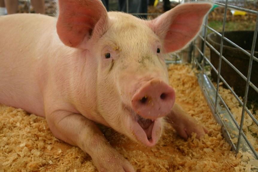 pork usmca