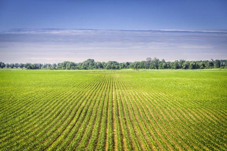 acreage report