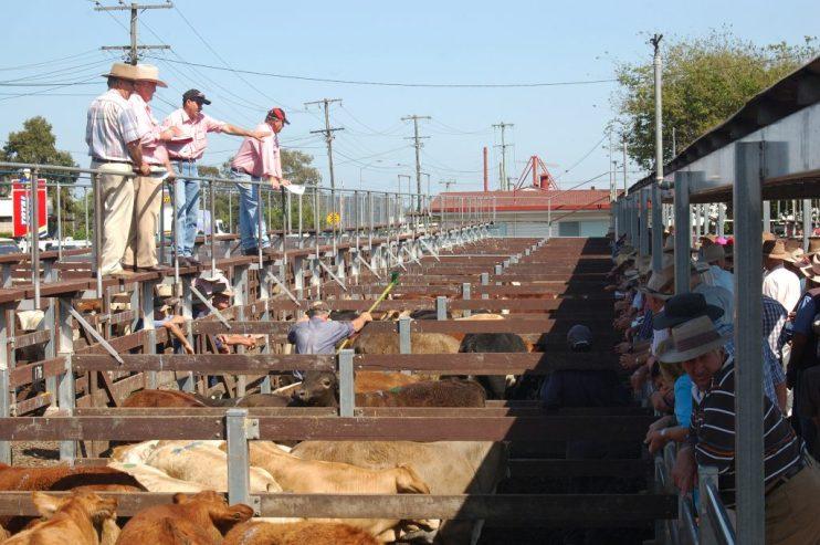 weekly livestock market