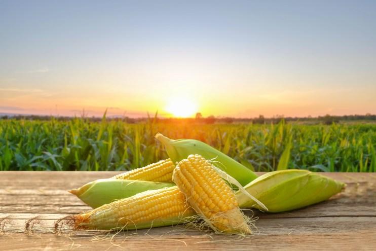 crop forecast