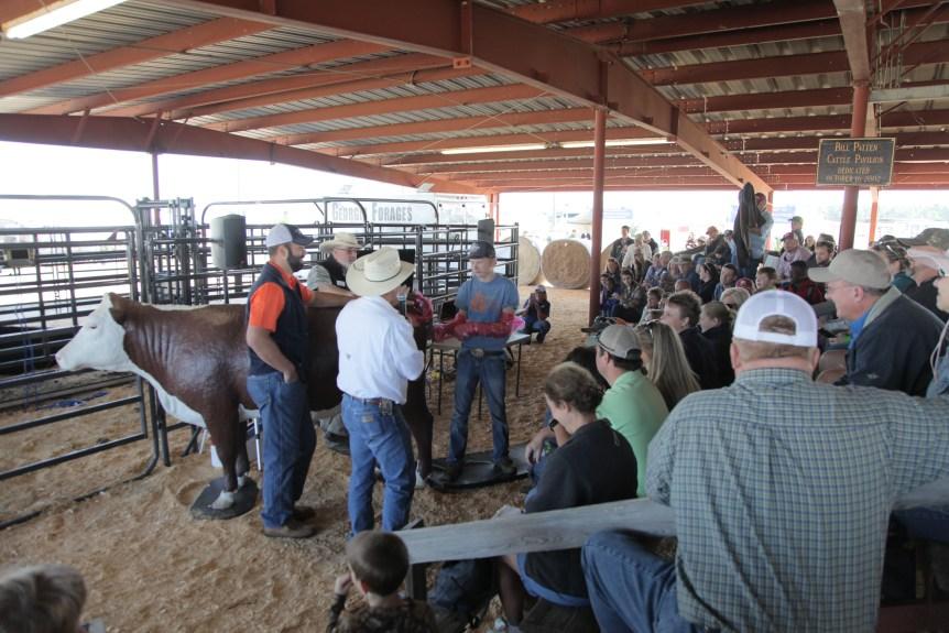 livestock exhibits
