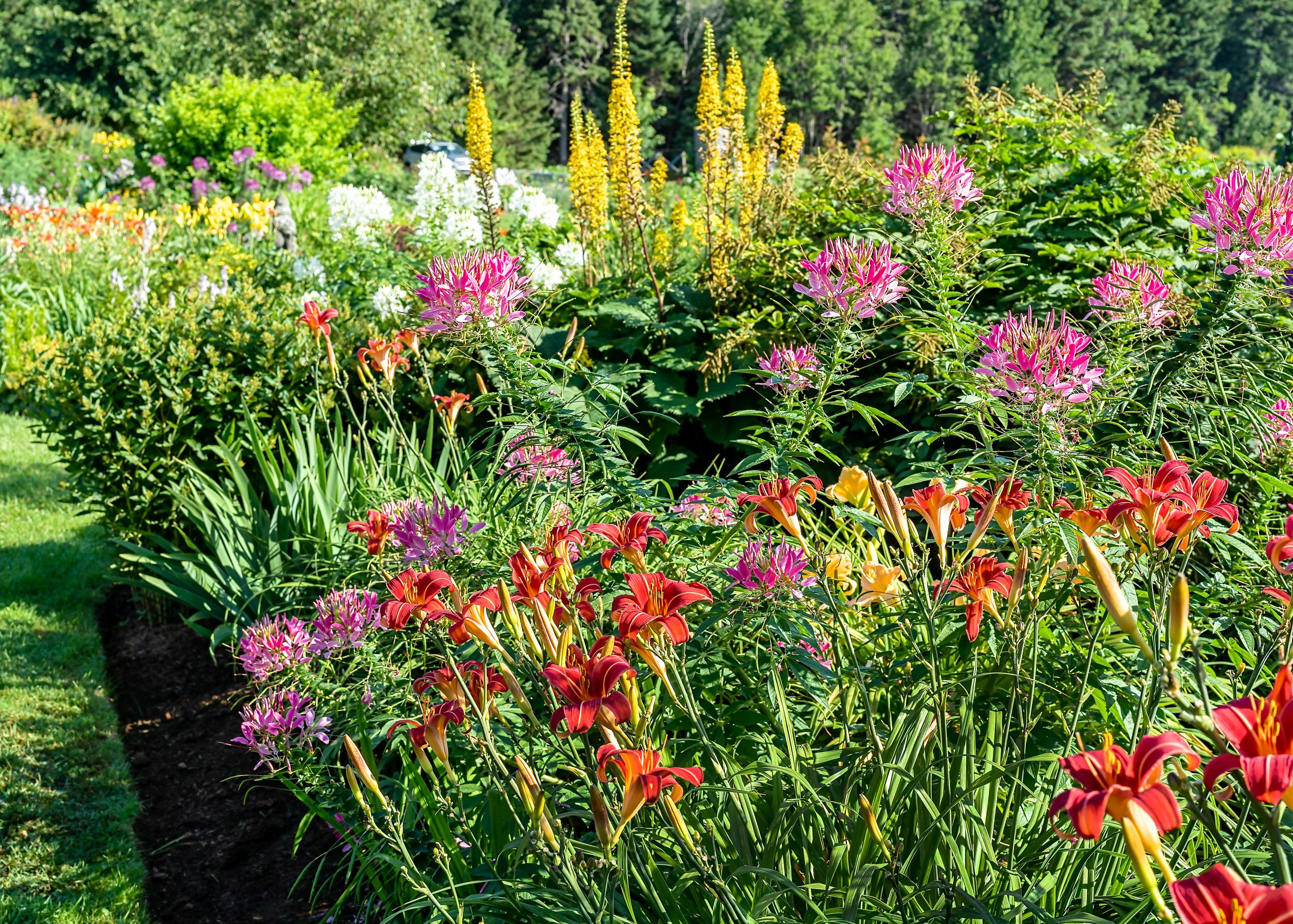 New Perennials To Look For This Year Southeast Agnet