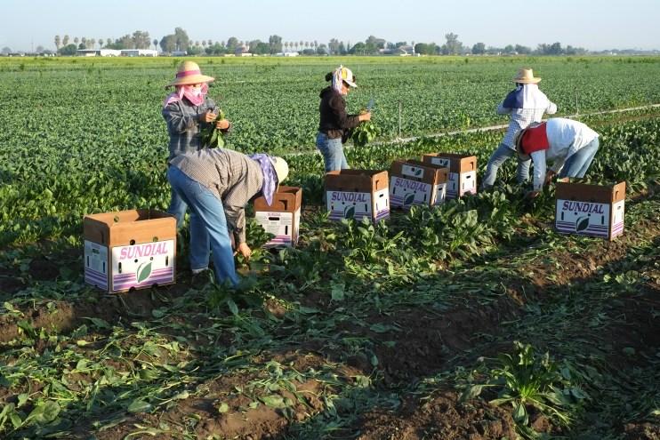 Immigrant Farmworkers