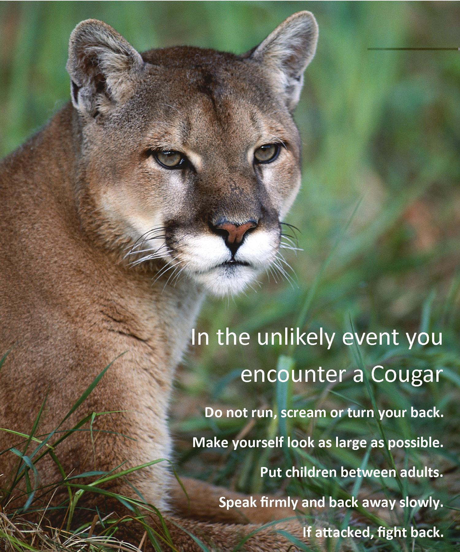 Cougar Sighting Southeast Neighbors
