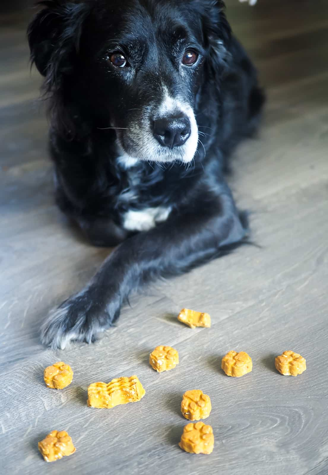 a black dog laying near some dog treats