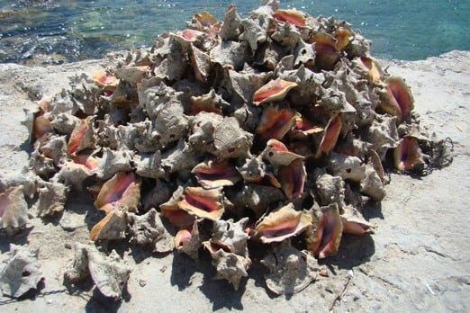 A conch shell pile in Gregory Town. Photo: Chuck Baier.