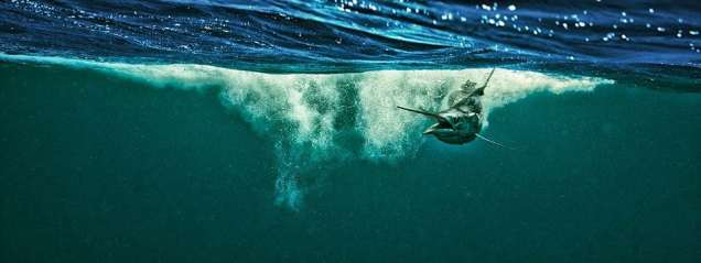 Dodge captures the sailfish's movement through the water.