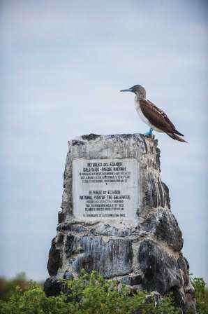 A blue-footed booby, Sula nebouxi, perches atop a monument to Galapagos National Park. Photo Credit: Jad Davenport