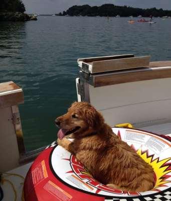 Pets aboard