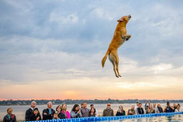 SEWE, Southeast Wildlife Exposition, events, Events in Charleston SC, South Carolina