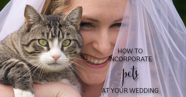 having dog as a ringbearer - how to