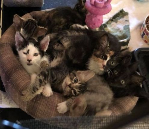 Basket of kittens!