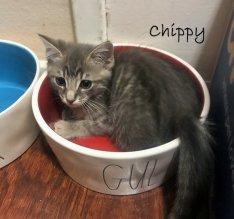 chippy karen orlando