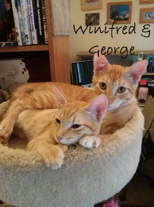 winifred and george 1949 1948