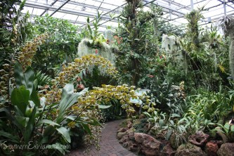 Atlanta Botanical Garden | Atlanta, GA