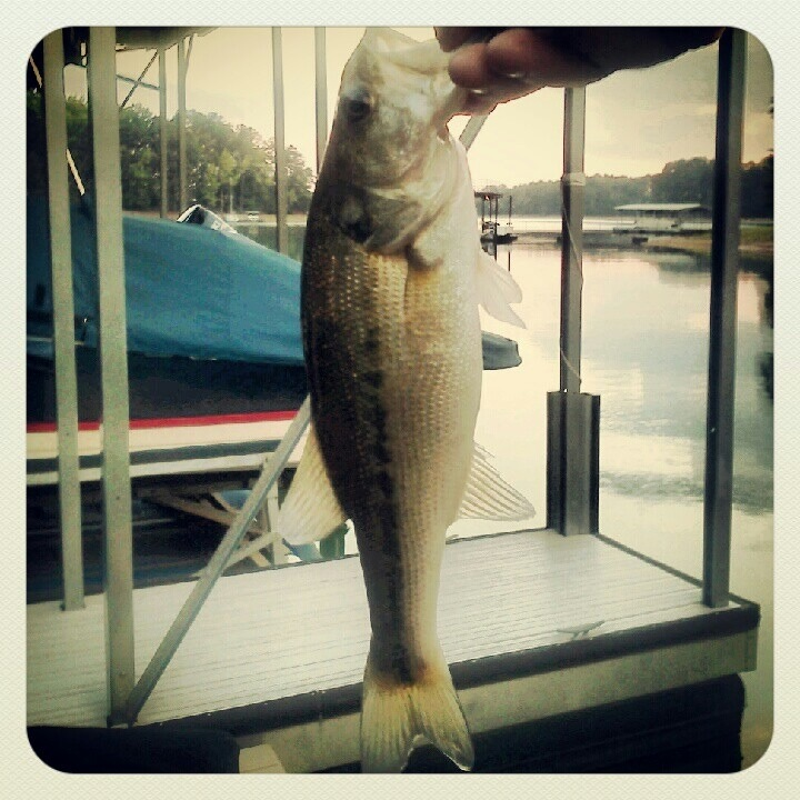 Another good day on the lake... (2/4)