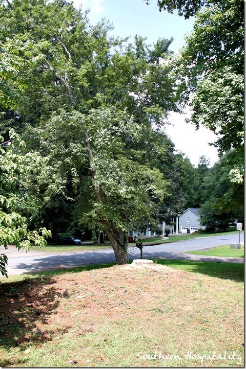 pine stump
