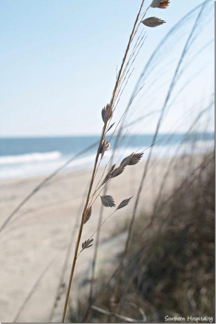 tybee beach grass