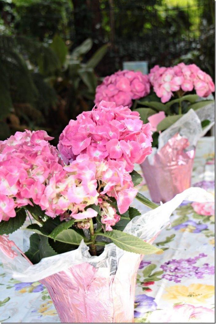 hydrangeas on table