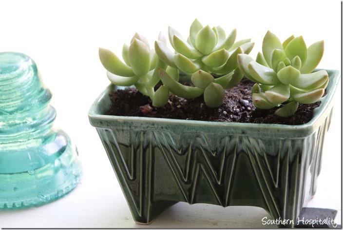 vintage planter with succulents