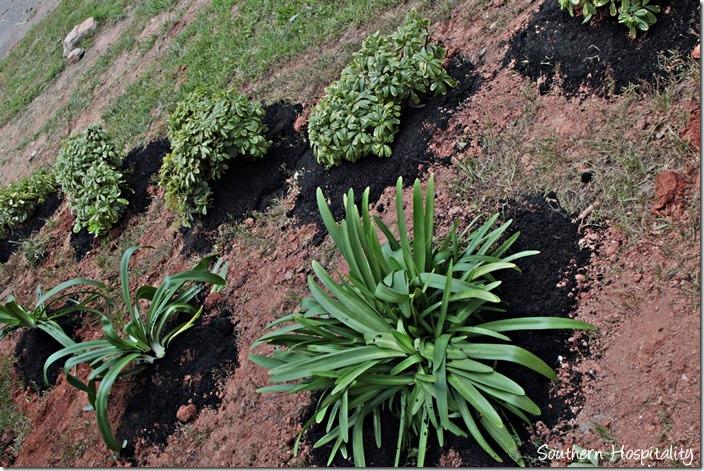adding compost to plants