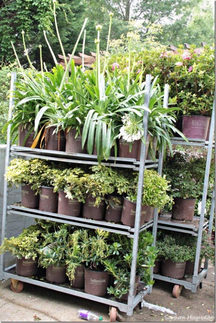 plants on racks