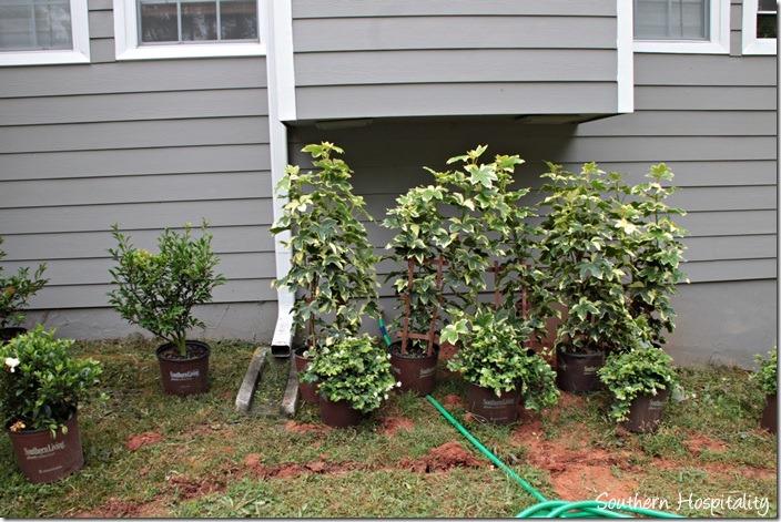 vines for trellis