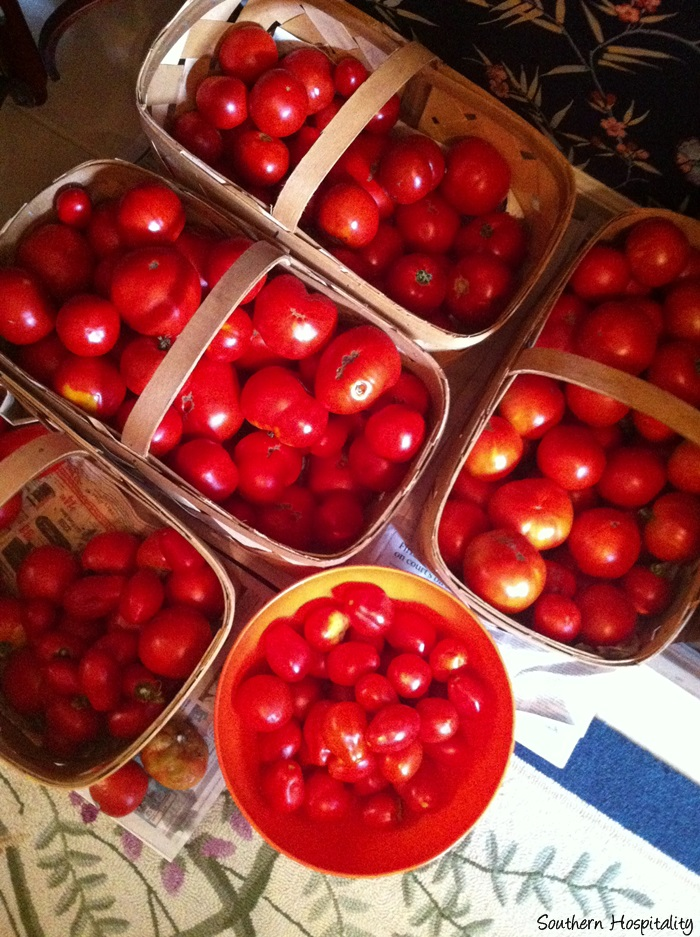 crop of tomatoes