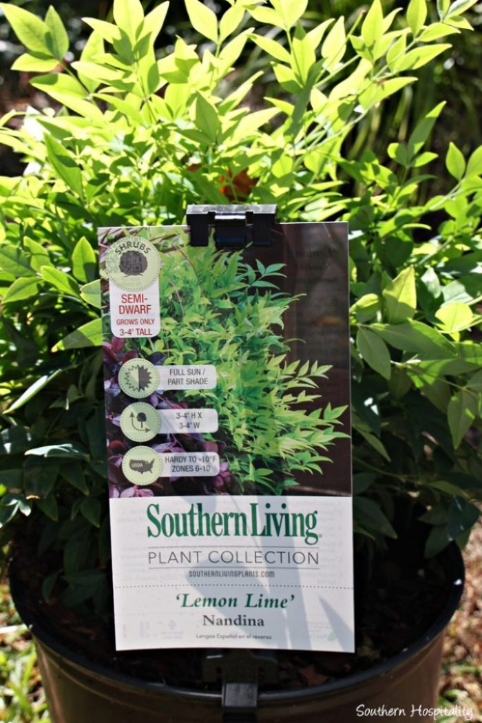 southern living plants20151017_006