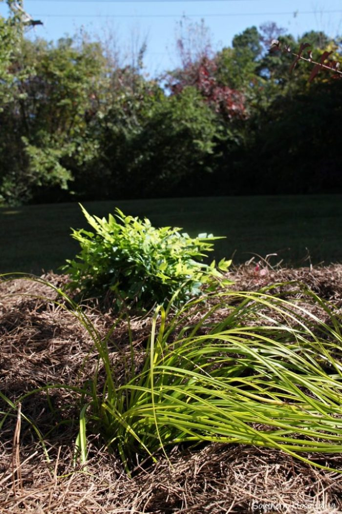 southern living plants20151017_015