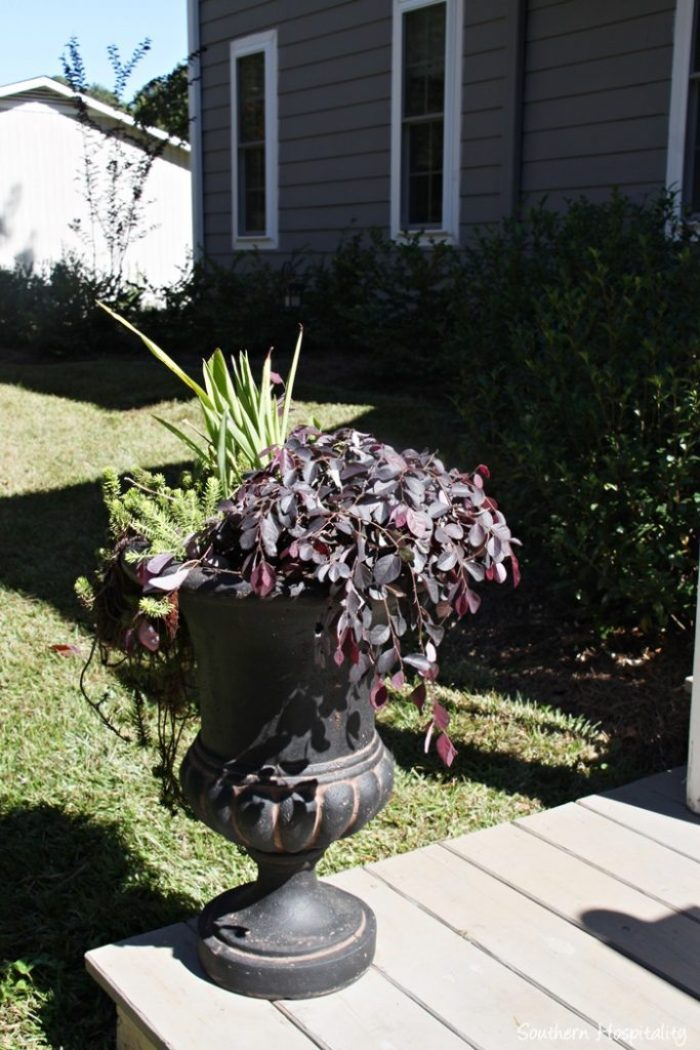 southern living plants20151017_017