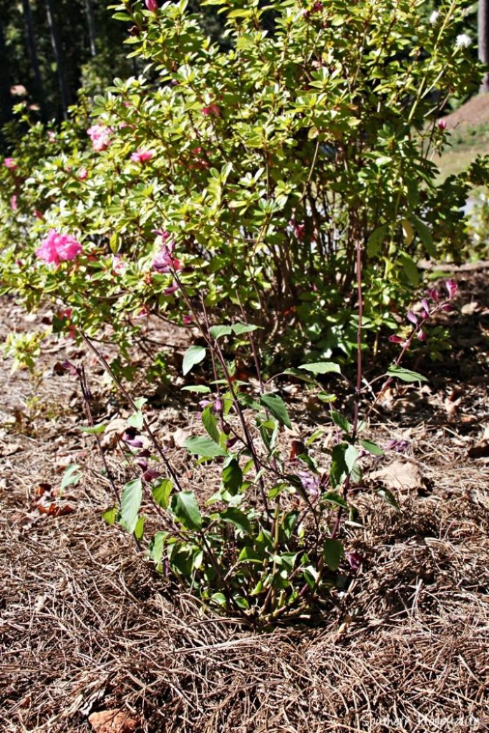southern living plants20151017_018