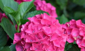 Moss Mountain Farm Flower Tour
