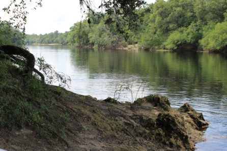 Pretty View of the Suwannee River