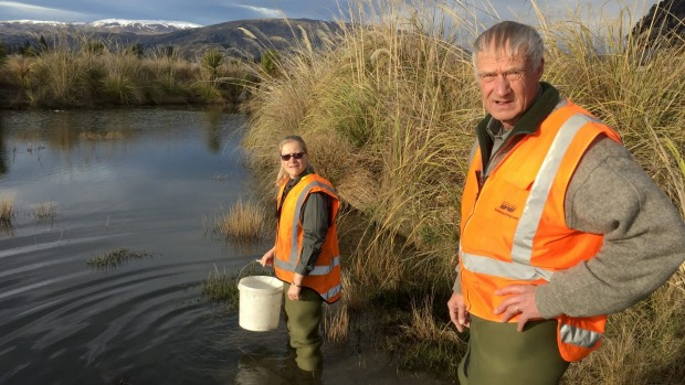 Goldfish crisis in Wanaka | Stuff.co.nz