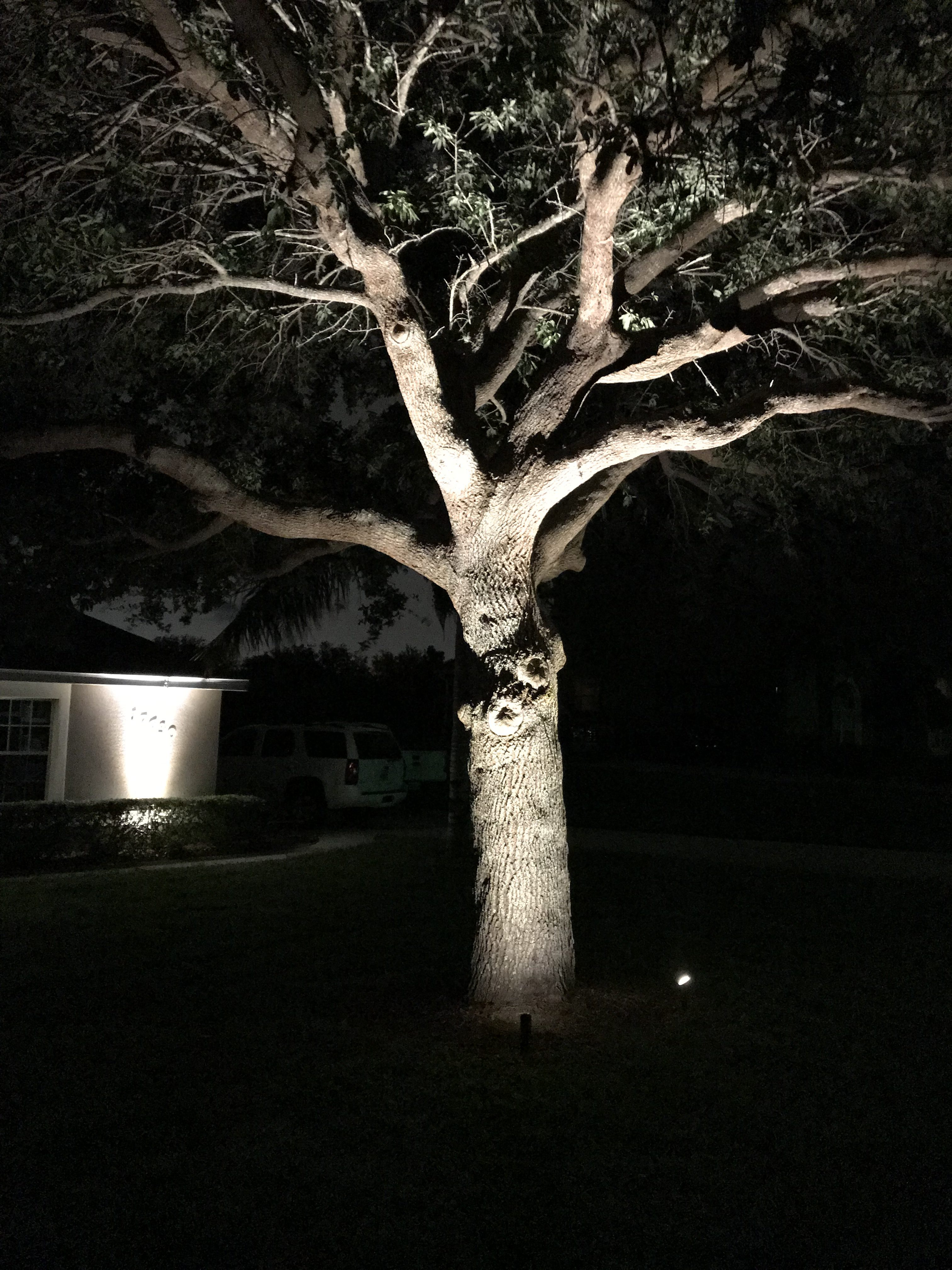 one large tree illuminated with a well light